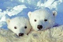 Bears <3