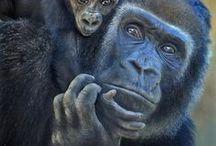 Moje oblíbená zvířata / V zoo a v přírodě