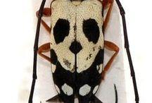 beatle bugs