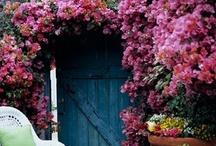 The secret garden... / by Susana Merlo de Novillo