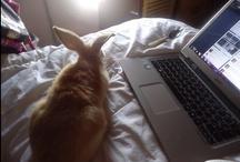 Tamborcitos / Tambor es mi conejo y gracias a él he podido agarrarle un enorme cariño a este tipo de animales! Por ahí verán algunas fotos de él...