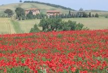 Spring in Tuscany / by Hotel Pendini Florence