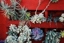 plantas / by carmen mayayo
