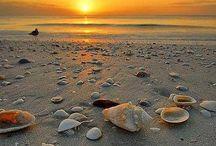 Zomer, zee en zon