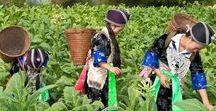 Laos Travel | Laos Reiseziele