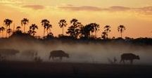 Botswana Travel | Botswana Reiseziele