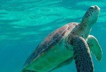 Belize Travel | Belize Reiseziele