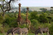 Safari Travel I Safari Reiseziele