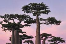Madagaskar Travel I Madagaskar Reiseziele