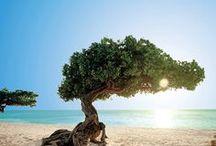 Aruba Travel I Aruba Reiseziele