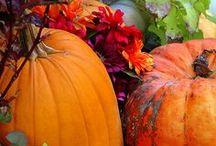 Pumpkin love