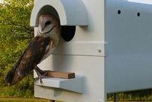 Helyben élő madár és állatvilág vendégekkel -- local fauna and birds / What do we care of