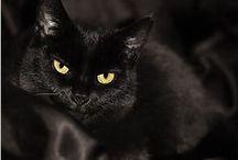 Gatti / Gatti-Cats / by Walter Rapone