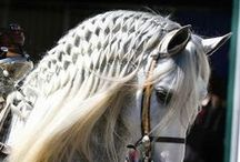 Equine Beauty / Horses