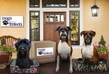 Dogs About Town / About us!  Small Business, Blog, Reviews and Fabulous Products for your Woofer