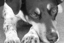 My Love / Czech Spotted Dog / Czech Spotted Dog / Cesky strakaty pes
