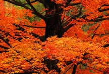 Fabulous Fall / anything and everything to do with Autumn---the colors, textures, crafts and clothes