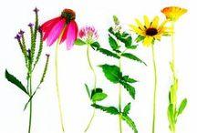wild plant adventures / gathering plants // color inspiration