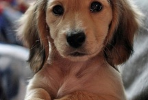 Pups / by Judy Layne