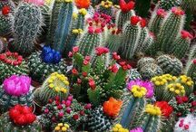 just beautiful plants / inspiration from wanderings within pinterest