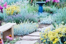 Secret Gardens and Garden Secrets / Outside stuff...
