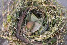Nesting Instincts / Eggs, Nests, 'n Things