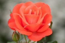 Coral Coolness and Peachy Keen-ness / ... My current crush on this current combo...