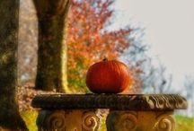 Punkins / I love Fall.