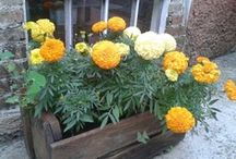 Jardinagem que adoro / gardening