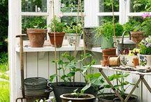 Kasvihuone / Ideoita kasvihuoneen tekoa varten ja sisustukseen