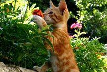 Kissat / Ideoita cation rakentamiseen sekä kuvia söpöistä kissoista