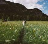 MOUNTAIN WEDDING INSPIRATOIN / Inspiration board for mountain and alpine weddings.