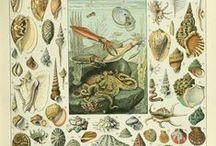 Sea shells pic