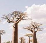 Madagascar Travel / Travel photography and inspiration from Madagascar.