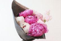 | LOvely Flowers |