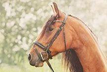 Horses / NHL j / by Linda Medrano