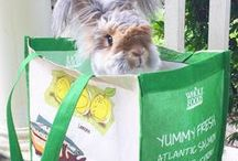 We love.... / We love ...  søte kaninbilder og kaninting. Og alt annet som er søtt. Is it cute? Then we love it.