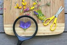 New Shoots Sunnynook Pinterest Ideas / Stuff we love and things we want to do at our centre