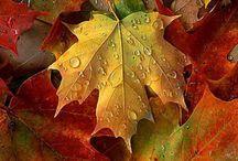"""Autumn beauty / """"Itt van az ősz, itt van újra..."""""""
