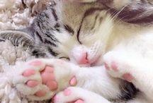 Cat / https://www.martielifestyle.blogspot.com