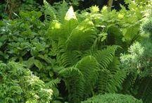 Garden ~ Shade loving plants