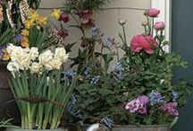Plant Container ideas
