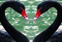 Birds, oiseaux / by Fabienne Janvier