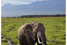 Africa Travel Ideas