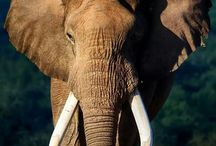 elephants // love
