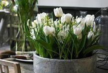decoration & flowers / schön gedeckt / by bella_francoforte