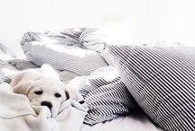 cats & dogs / des menschen beste freunde / by bella_francoforte