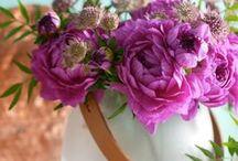 My Friday - Flowerday / All die Blumendekorationen, die ich allwöchentlich am Freitag auf meinem Blog ins Netz stelle sind hier versammelt.