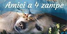 Animali domestici / Tutti i consigli per accudire al meglio gli animali domestici, perché i nostri amici a 4 zampe hanno bisogno solo dl meglio che c'è! Scopri la nostra sezione riservata: http://animali.uncome.it/  #animals #animali #animallover #cats #dogs #catlovers #doglovers #fish #bunny #hamster #cane #gatto