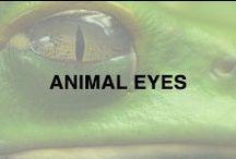 Unique Eyes